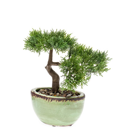 Kunst Bonsai Cedertræ 25 cm