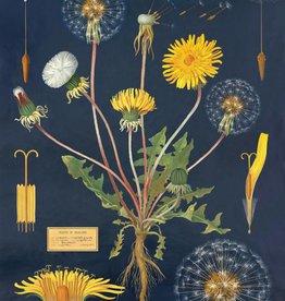 VINTAGE POSTER - Dandelion Chart (50x70cm)