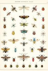 VINTAGE POSTER - Natuurlijke Geschiedenis: Insecten (50x70cm)