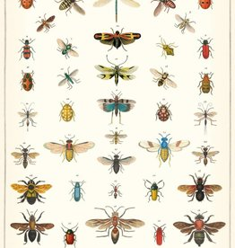 NATURAL HISTORY INSECTS - VINTAGE POSTER 50 cm x 70