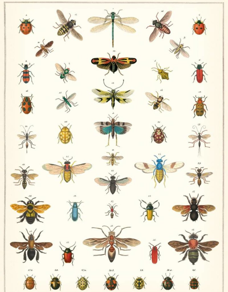 VINTAGE POSTER - Natural History: Insects (50x70cm)