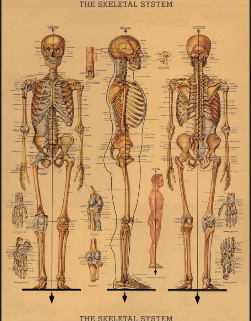 AFFICHE VINTAGE - Squelette (50x70cm)