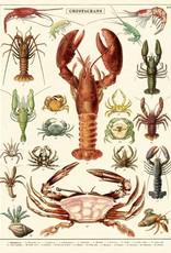AFFICHE VINTAGE - Crustacés (50x70cm)