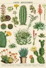 AFFICHE VINTAGE - Cacti & Succulents (50x70cm)