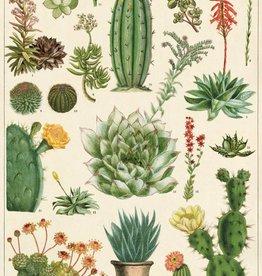 VINTAGE POSTER - Cacti & Succulents (50x70cm)