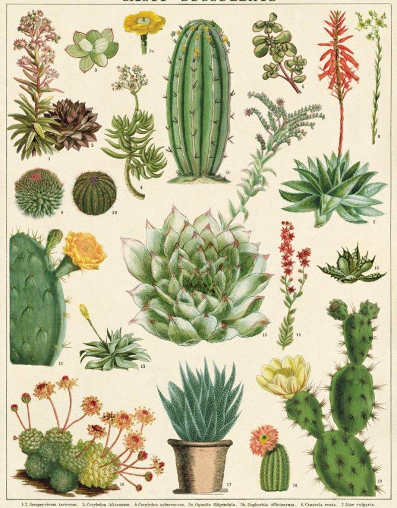 VINTAGE POSTER -  Cactussen & Succulenten (50x70cm)