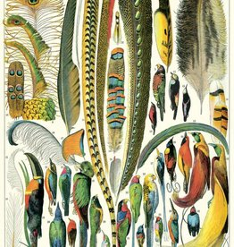 VINTAGE POSTER - Feathers (50x70cm)