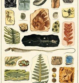 VINTAGE POSTER - Fossils (50x70cm)