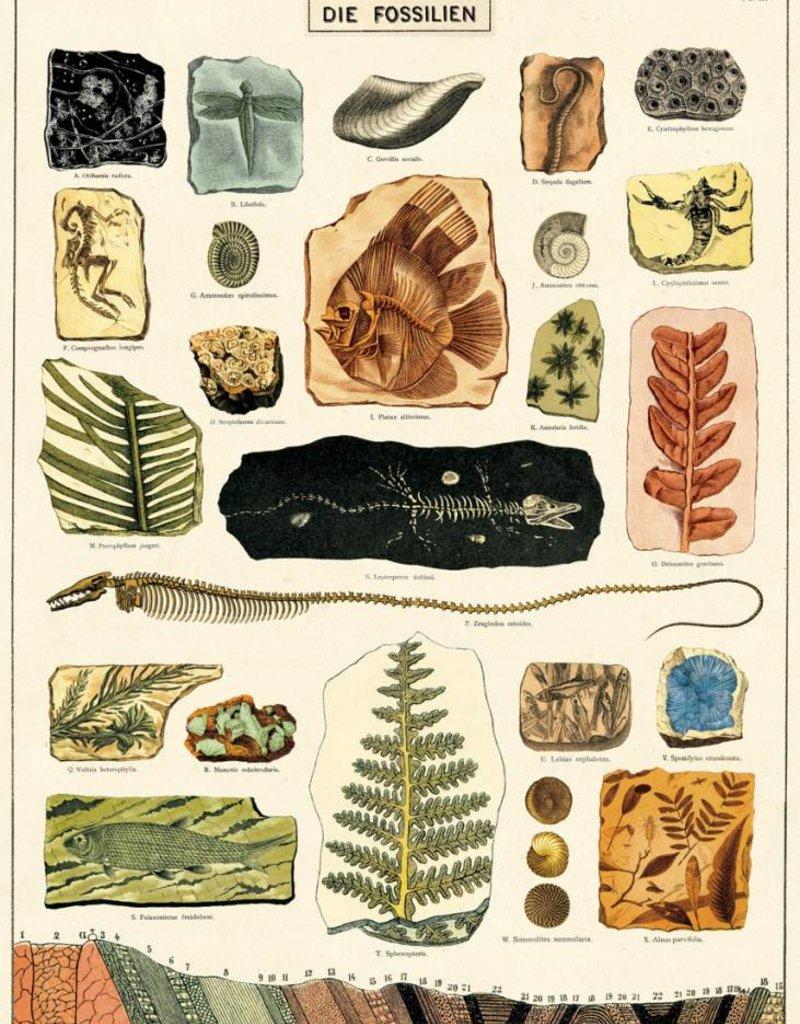 AFFICHE VINTAGE - Fossiles (50x70cm)
