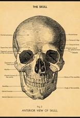 AFFICHE VINTAGE - Le Crâne (50x70cm)