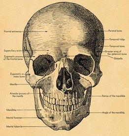 VINTAGE POSTER - The Skull (50x70cm)