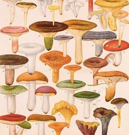 VINTAGE POSTER - Mushrooms (50x70cm)