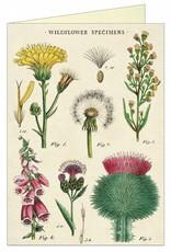 CARTE DE VOEUX VINTAGE - Fleurs sauvages