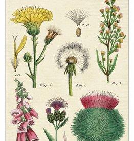 VINTAGE GREETING CARD - Wildflowers