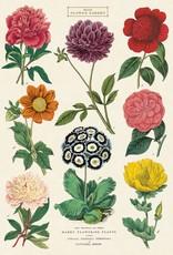 VINTAGE POSTER - Botanica Nr. 2 (50x70cm)