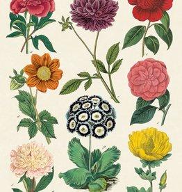 AFFICHE VINTAGE - Botanica No. 2 (50x70cm)