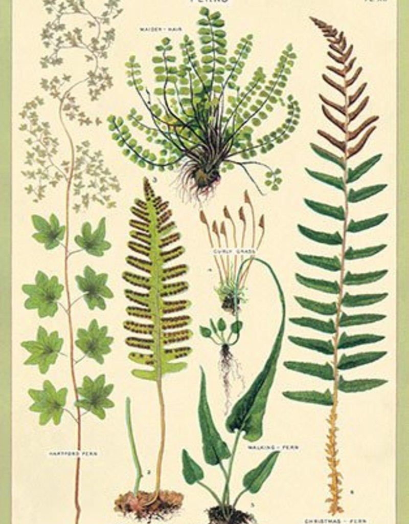 VINTAGE POSTER - Ferns (50x70cm)