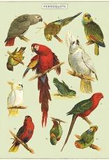 AFFICHE VINTAGE - Perroquets (50x70cm)