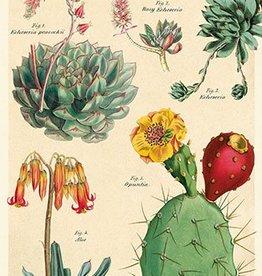 VINTAGE POSTER - Cacti & Succulents No. 2 (50x70cm)