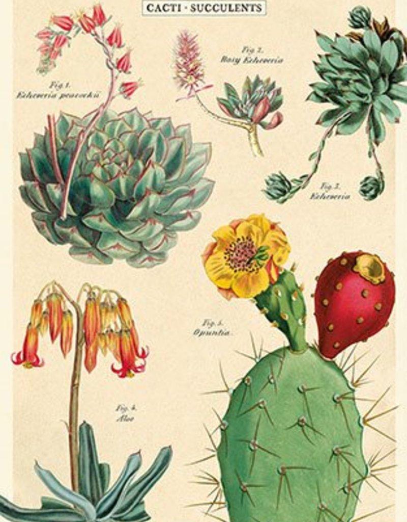 AFFICHE VINTAGE - Cacti & Succulents No. 2 (50x70cm)