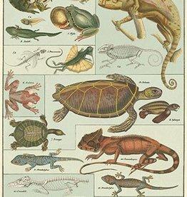 VINTAGE POSTER - Reptiles & Amphibians (50x70cm)