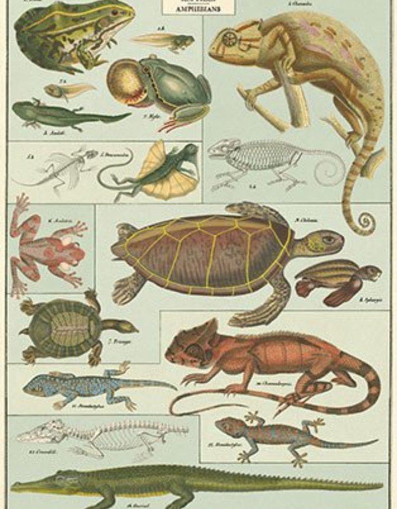 VINTAGE POSTER - Reptielen & Amfibieën (50x70cm)
