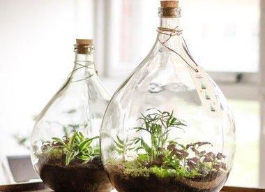 Botanische Planten