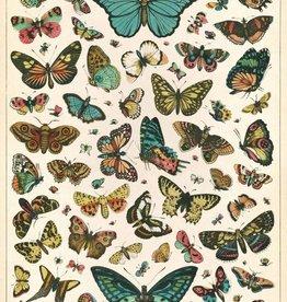 AFFICHE VINTAGE - Histoire Naturelle: Papillons (50x70cm)