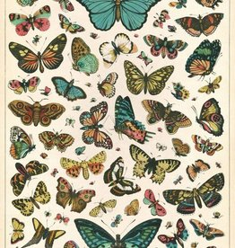 BUTTERFLY CHART - VINTAGE POSTER 50cm x 70