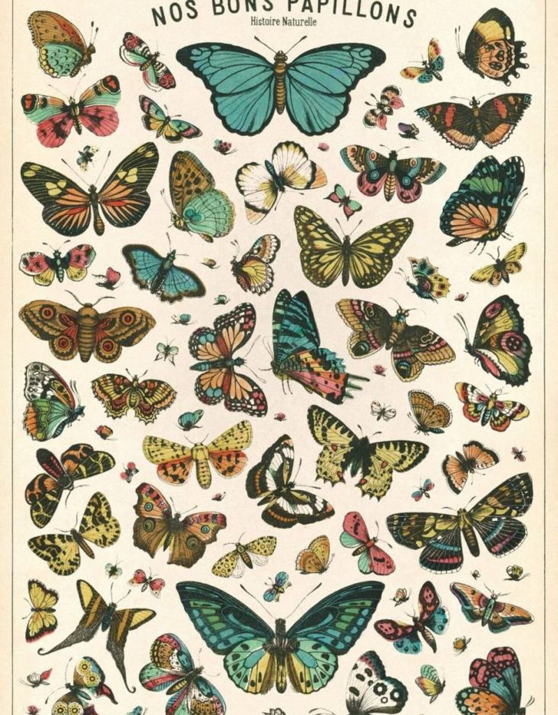 VINTAGE POSTER - Natural History: Butterflies (50x70cm)