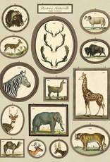 VINTAGE POSTER - Natural History: Animals (50x70cm)