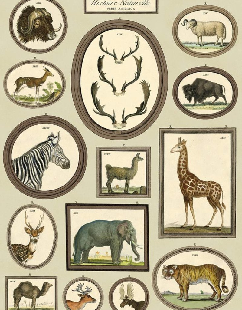 NATURAL HISTORY ANIMALS - VINTAGE POSTER 50 cm x 70