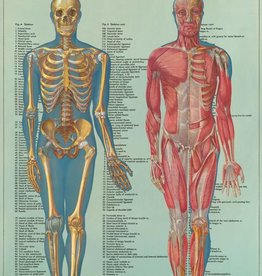 VINTAGE POSTER - Anatomie Serie IV (50x70cm)