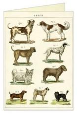 VINTAGE GREETING CARD - Dog Chart