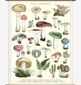 VINTAGE SCHOOL CHART - MUSHROOMS  100 x 70