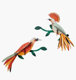 Paradijsvogel Obi