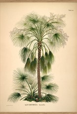 POSTER (70x100) - botanical palm print (paper)