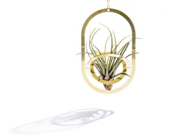 Airplants - Accessories