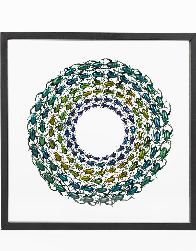 Wheel of Beetles - Groen & Blauw