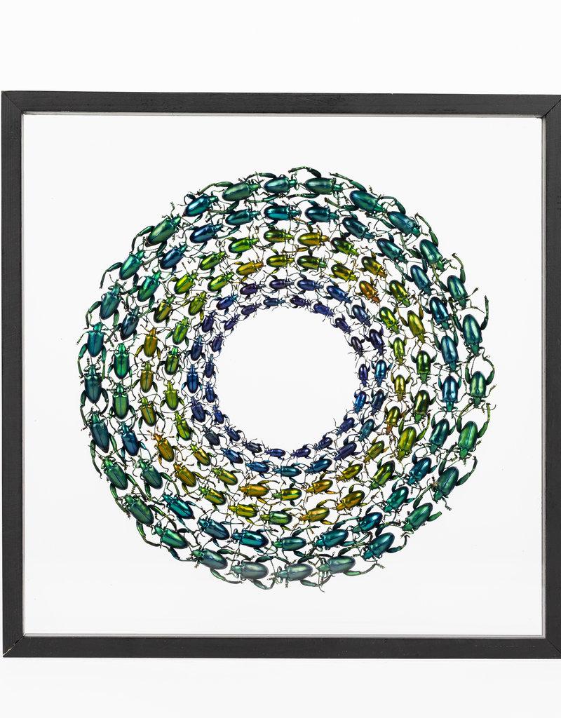 Wheel of Beetles