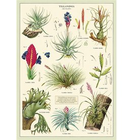 VINTAGE POSTER - Air Plants (50x70cm)