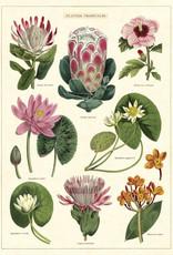 AFFICHE VINTAGE - Fleurs Tropicales (50x70cm)