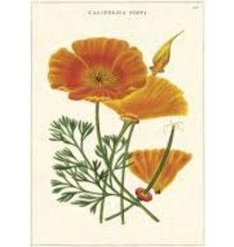 California Poppy - Wenskaart