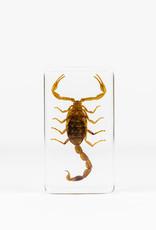 Animaux Spéciaux PAPERWEIGHT - Scorpion (xl)