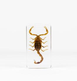 Animaux Spéciaux PRESSE-PAPIER - Scorpion (xl)