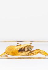 Animaux Spéciaux PRESSE-PAPIER - Crabe