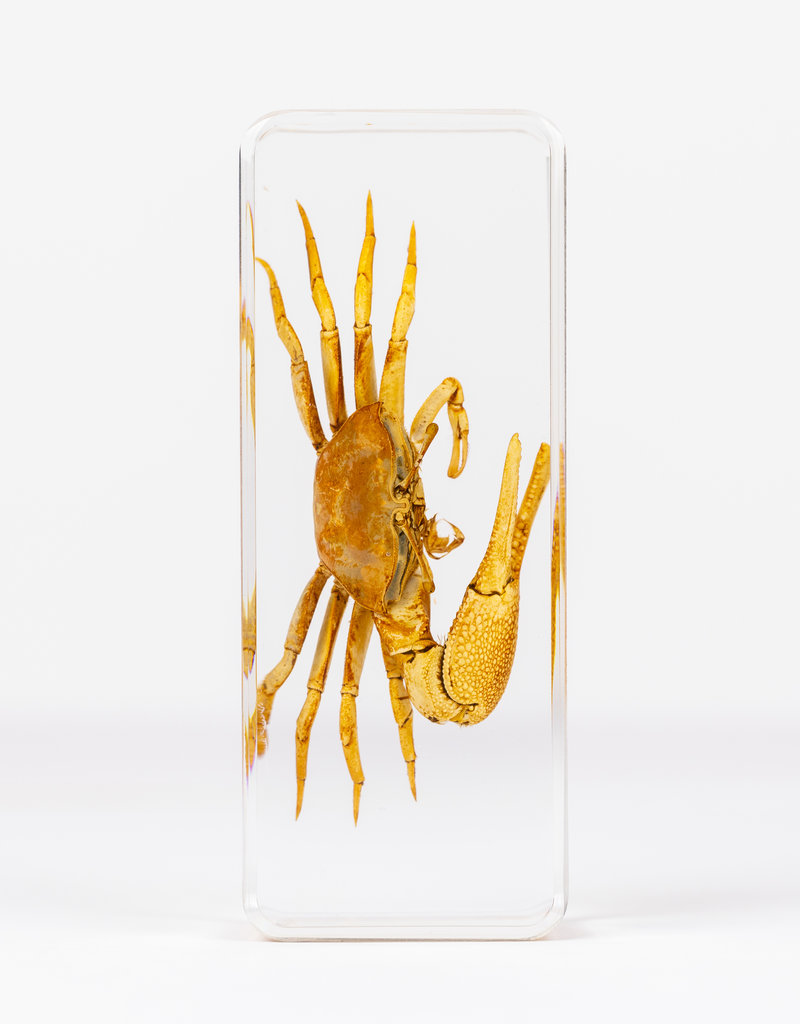 Animaux Spéciaux PAPERWEIGHT - Crab