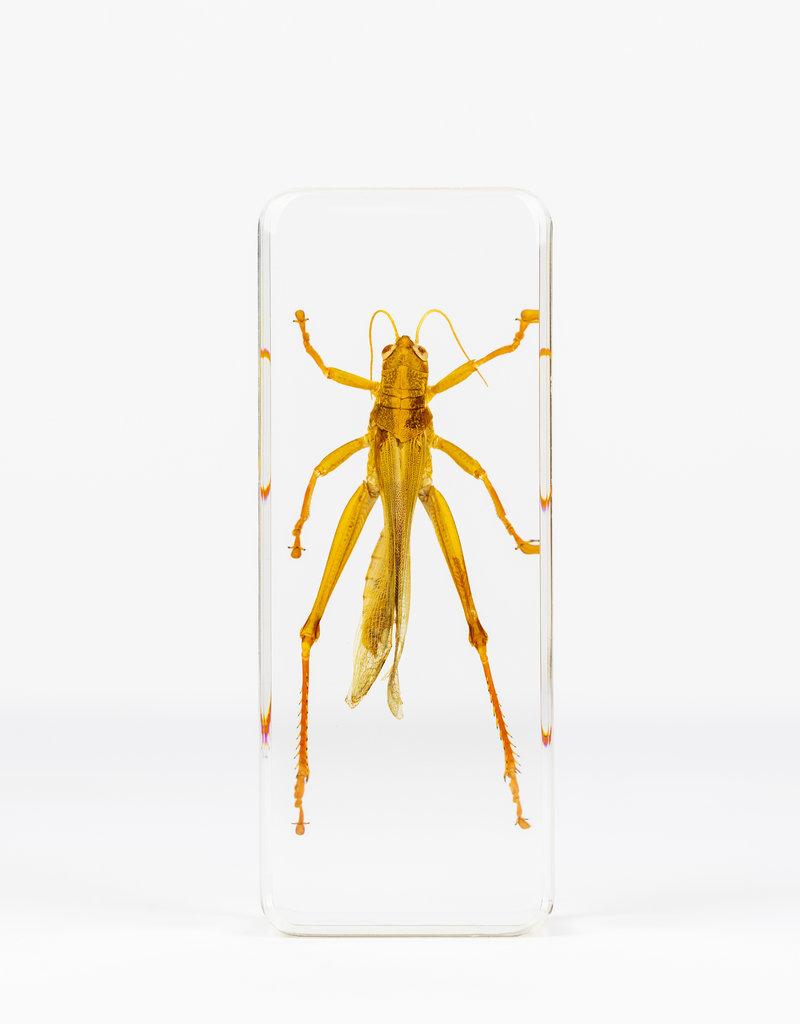 Animaux Spéciaux PAPERWEIGHT - Grasshopper