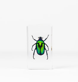 Animaux Spéciaux PAPERWEIGHT - Green Beetle