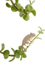 Gouden Plantenhanger - Kameleon